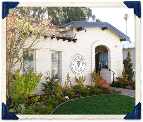 Burlingame pet clinic