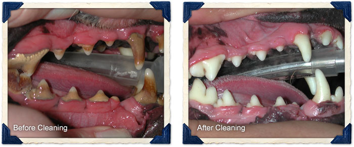 Dental Before and After Cleaning