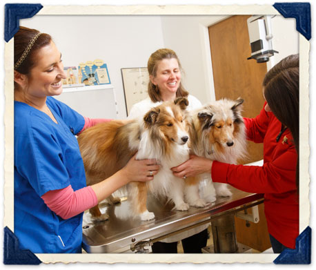 burlingame pet wellness exams