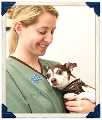 Post-Op care for Pets