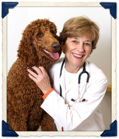 Burlingame, CA Veterinarian