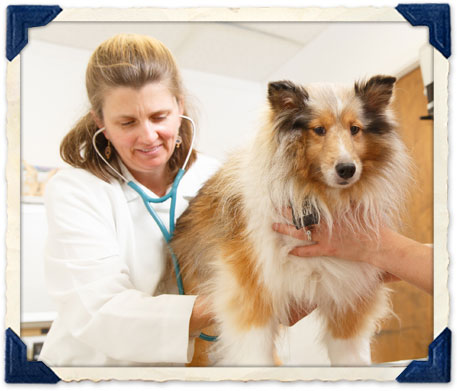 Burlingame pet vaccinations